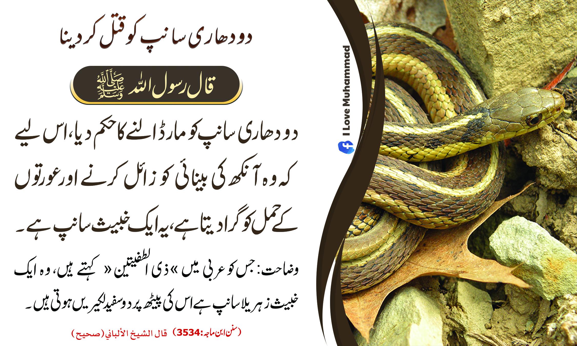 دو دھاری سانپ کو قتل کر دینا JPG.jpg